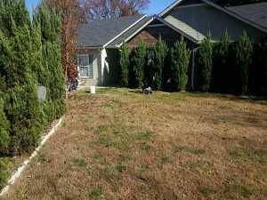2522 Inverloch Circle backyard